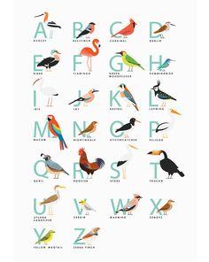 birds alphabet by Ross McKillop