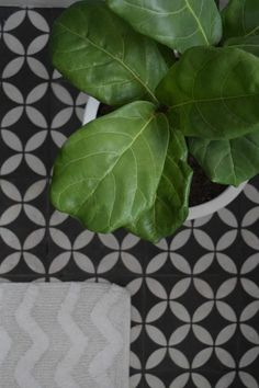 Bring life and interest to your interiors with indoor plants. Here are the top 10 trending indoor plants with loads of tips on how to care for them too! Bathroom Plants, Bathroom Spa, Bathroom Faucets, Simple Bathroom, Bathroom Flooring, Small Toilet, Black And White Tiles, Shower Shelves, Bathroom Styling