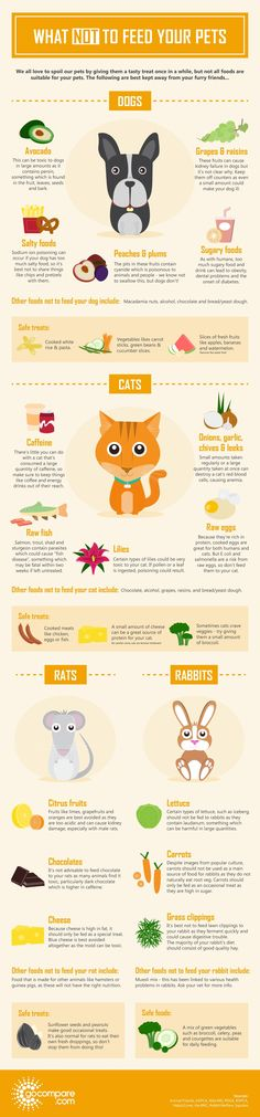 Do you own a pet? Do you know what NOT to feed them? Take a look at  this infographic which explores some of the foods best kept away from  your cat, dog, rabbit or rat, and make sure you're aware of the dangers of  feeding the wrong treats to your furry friends.