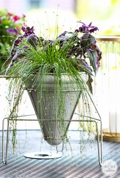 Food Mill Planter: Purple Passion (indoor plant) & Fiber Optic Grass.You'll be able to bring it in inside at end of summer.<3 this combination!