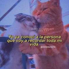 Love Mate, Miss U My Love, Cute Cat Memes, Response Memes, Amor Quotes, Quotes En Espanol, Love Phrases, Foto Jungkook, Motivational Words