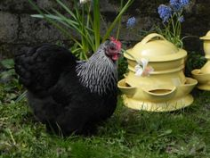 Ceramic Chicken Feeder size  Large by RockBottomPottery on Etsy, $132.00