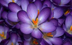 flores - Pesquisa Google