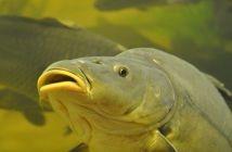 Sekrety karpiowania Fish, Pets, Animals, Animales, Animaux, Pisces, Animal, Animais, Animals And Pets