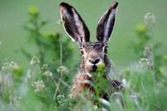 Petit avec des grandes oreilles