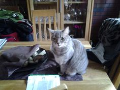 Gissi und Timmi Katze | Pawshake