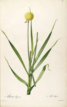 Flower 13.