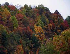 Appalachian Mountain Fall By Chris Flees