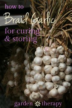 How to Braid Garlic for Stylish Winter Storage Learn how to braid garlic for both decorative and storage purposes. Step-by-step photos will help to show the tricky steps so that it will look gorgeous. Braiding Garlic, Gardening For Beginners, Gardening Tips, Conservation, Canned Food Storage, Agriculture Biologique, Autumn Garden, Garden Fun, Garden Theme