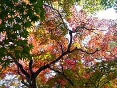 それぞれの色。工夫次第で引き立て合える。共に輝きましょう。 #奈良  #紅葉  #色  #赤  #スマホ  #Zenfone