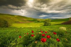 peonies Photo by Lazar Ovidiu -- National Geographic Your Shot National Geographic Photos, Your Shot, All Over The World, Amazing Photography, Peonies, Wild Flowers, Special Events, Sunset, Nature