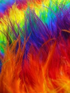 all colors by quenalbertini - colorful feathers-via flickr...