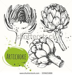 Artichoke. Set of hand drawn artichoke. Fresh organic food. Vector illustration with sketch vegetable. Black and white.