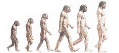 En esta imagen podemos apreciar una evolucion del ser humano, como hay un cambio en la forma de andar del ser humano, dejando asi libre las manos para  la creacion de herramientas y la transpiracion del curpo