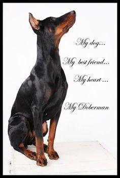 Put Skie our dog buffy #Dobermanpinscher #Doberman