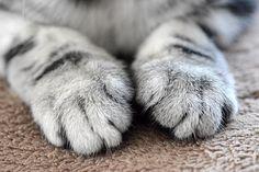 可愛すぎてたまらない! 丸くてモフモフの『猫の前足』20選