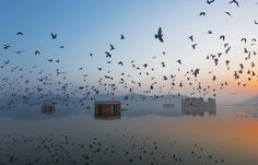 Jal Mahal During Sunrise  Stunning Early Entries in 2015 National Geographic Traveler Photo Contest - My Modern Met