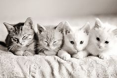 Kittens in a row.