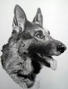 dibujos de animales a lapiz - Buscar con Google