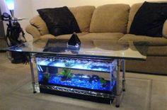 awesome aquariums fish tanks