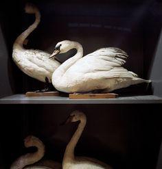 Richard Ross . Booth's Bird Museum, Brighton, England 1984