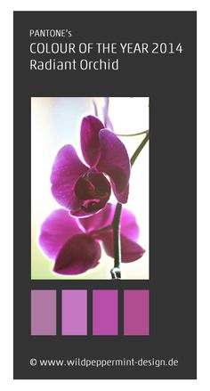 Farbe des jahres 2014, pantone, radiant orchid // www.wildpeppermint-design.de