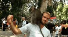 Levrette sur ta tête ! http://www.15heures.com/gif/By4e #LOL