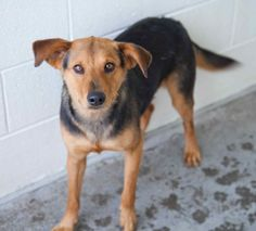 Murphy was adopted!