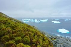 Climate Change Is Turning Antarctica Green - Scientific American