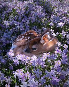 Ciervo&flores.