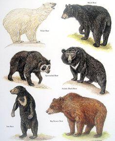 Bear Print Polar Bear Black Bear Sun Bear by mysunshinevintage