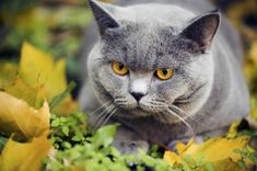 Home Remedy Dewormer for Cats
