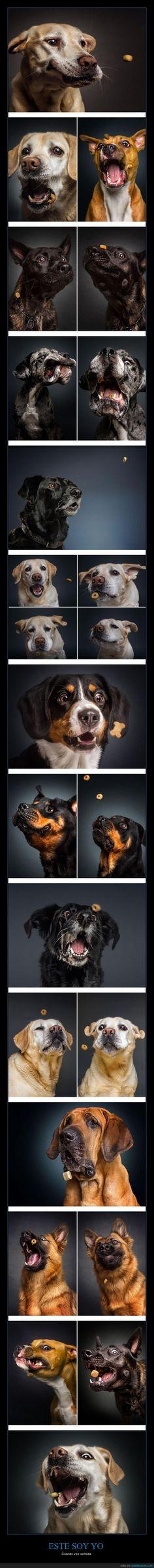 Fotógrafo captura las graciosas caras de perros cogiendo comida del aire - Cuando veo comida   Gracias a http://www.cuantarazon.com/   Si quieres leer la noticia completa visita: http://www.estoy-aburrido.com/fotografo-captura-las-graciosas-caras-de-perros-cogiendo-comida-del-aire-cuando-veo-comida/