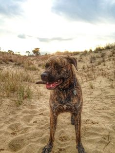 Dog day on the Outer Banks