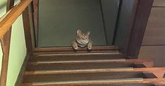 「猫に餌をやるの忘れた」出先の病院でふと気づいたので家に帰ってみると、とてつもない顔をしたネコが玄関からお出迎えしてくれました。機嫌が悪いことが一瞬で悪いことが分かる顔をしていたので対策をしてみると・・・