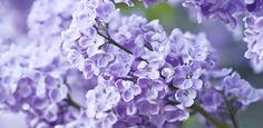 12 Baby Name Ideas Inspired By The Many Shades Of Purple