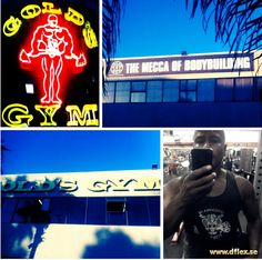 Gold's Gym Venice Gold's Gym, David D, Best Gym, Beast Mode, Personal Trainer, Fitspo, Venice, Bodybuilding, Neon Signs