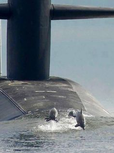"Dolphins ""escort"" a US Navy submarine"
