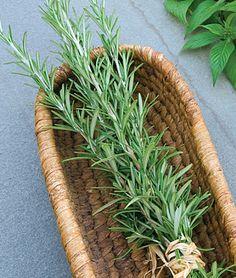 Definitely growing Rosemary next year! Potager Garden, Garden Planters, Garden Landscaping, Herb Gardening, Garden Boxes, Fresco, Medicinal Plants, Herb Plants, Spice Garden