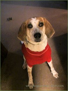 Dog Pawsitive Tidbits: Hound Looking Good In His Dog Sweater : http://www.dogpawsitivetidbits.com/2015/12/hound-looking-good-in-his-dog-sweater.html