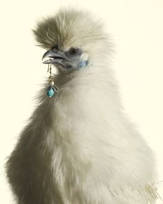 Luxury Chicks by Peter Lippmann for Marie Claire 2