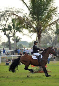 Champ 163 & Rodrigo Pessoa       - $50,000 G&C Farm Jumping Derby.