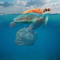 Pollution in the ocean is causing an enormous environmental problem. One of them is called plastic soup. Here are 6 facts about plastic in the ocean. Collections Photography, World Photography, Animal Photography, What Is Plastic, Plastic Art, Plastic Spoons, Environmental Posters, Environmental Issues, Ocean Pollution