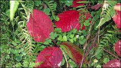 Contraste rouge et vert