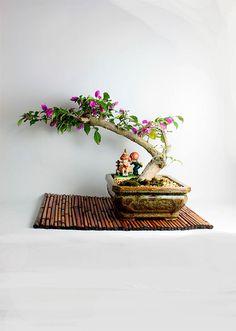 """Bougainvillea Bonsai tree, """"Winter Tropicals Collection by LiveBonsaiTree by LiveBonsaiTree on Etsy"""