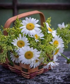 Beautiful Flowers Garden, Happy Flowers, Congratulations Photos, Driving Miss Daisy, Indian Bridal Photos, Flower Places, Daisy Love, Bouquet, Good Morning Flowers