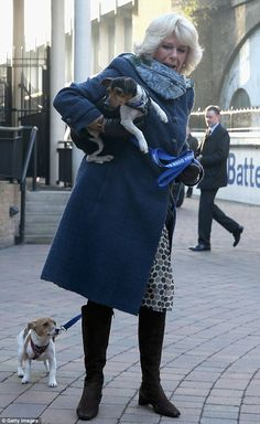 Camilla struggles to hold on to her Jack Russells Beth and Bluebell as she arrives at the Battersea dog and cat home today - though the Duchess said the pups were 'overawed' by their trip to London 12-12-12