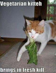 Lettuce laugh!  yes vegan kitty.
