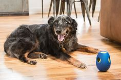 Tikr: A Treat Activity Toy for Dogs