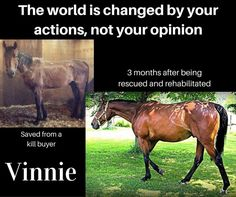 Don't just sit there and feel sorry for Vinnie, donate to a local horse rescue organization or adopt a horse today! Horse Girl, Horse Love, Rodeo Quotes, Horse Rescue, Rescue Dogs, Compassion Quotes, Animal Rescue Center, Abuse Quotes, Horse Posters